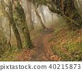 Footpath leading trough a forest. 40215873