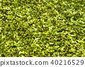 녹색 커튼 에너지 절약 40216529