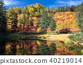 가을, 단풍, 늪 40219014