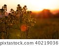 French landscape - Vosges 40219036