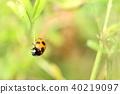 瓢蟲 七斑瓢蟲 蟲子 40219097
