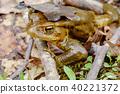 青蛙 蟾蜍 討厭的傢伙 40221372