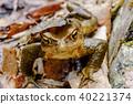 伽瑪青蛙 40221374