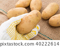 감자 40222614
