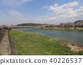 hyakusen cherry blossom spots, shiroishi river, one thousand cherry blossoms 40226537