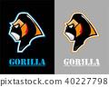Gorilla.Gorilla face. Gorilla head. 40227798