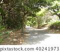 光和阴影树隧道 40241973