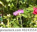 bloom, blossom, blossoms 40243554
