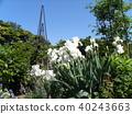 german iris, bloom, blossom 40243663
