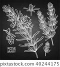floral, herbal, rosemary 40244175