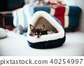 睡觉在米球床上的奇瓦瓦狗 40254997