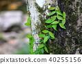 나무, 거목, 식물 40255156