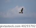 นก,เครื่องบินออสเปรย์,มหาสมุทร 40255702
