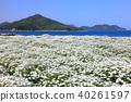 มหาสมุทร,เกาะ,หาดทราย 40261597