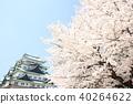 나고야 성, 벚꽃, 천수각 40264622