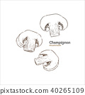 Champion mushroom, hand draw sketch vector. 40265109