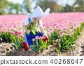Child in tulip flower field. Windmill in Holland. 40268647