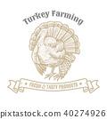 animal, turkey, vector 40274926