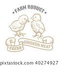 animal, chicken, vector 40274927