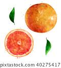 Grapefruit on white background. Watercolor illustration 40275417