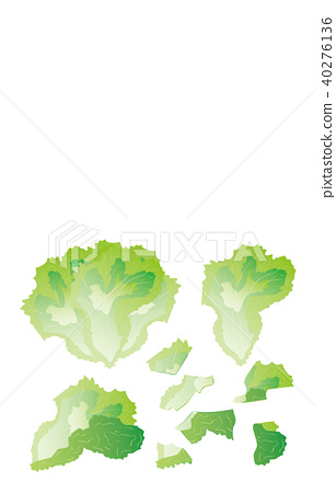 Cut vegetable leaf lettuce 40276136