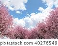 벚꽃이있는 풍경 Perming3DCG 일러스트 소재 40276549