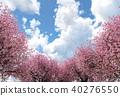 벚꽃이있는 풍경 Perming3DCG 일러스트 소재 40276550