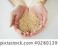 水稻 稻米 米 40280139