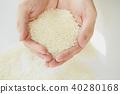 水稻 稻米 米 40280168