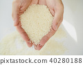水稻 稻米 米 40280188