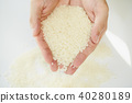 水稻 稻米 米 40280189