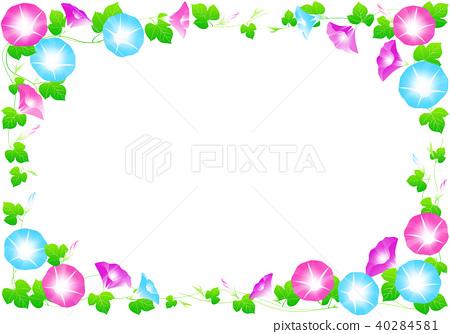 morning glory, summer, flower 40284581