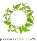 nettle, medicinal, frame 40285293