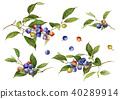 藍莓 水果 健康 40289914