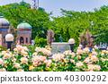 일본의 봄 요코스카 붸루니 공원의 장미원 40300292