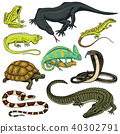 Set of reptiles and amphibians. Wild Crocodile, alligator and snakes, monitor lizard, chameleon and 40302791