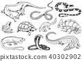 Set of reptiles and amphibians. Wild Crocodile, alligator and snakes, monitor lizard, chameleon and 40302902
