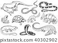 amphibian, animal, vector 40302902