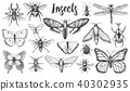 Different insects set. Butterfly and dragonfly, bug and pet bee. Mystical symbol of freedom 40302935