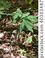 植物 植物学 植物的 40303487