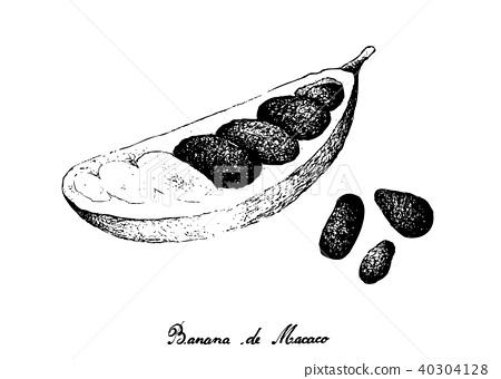Banana de Macaco Fruits on White Background 40304128
