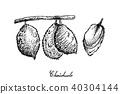 水果 手绘 草图 40304144