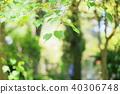 새잎, 어린 잎, 새싹 40306748