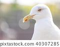 นกนางนวล 40307285