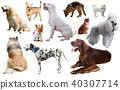 dog breed set 40307714