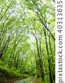 신록의 나무 가로수 40313635