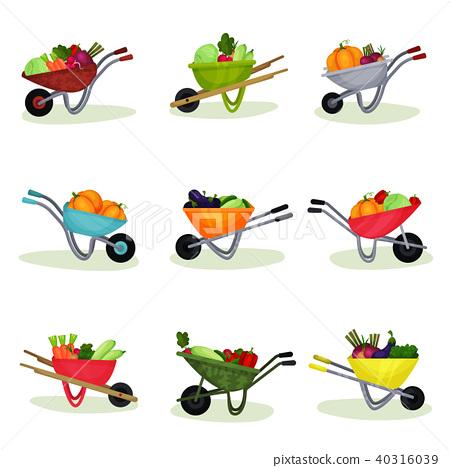 Flat vector set of garden wheelbarrows full of fresh vegetables. Natural and tasty food. Organic 40316039