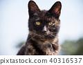 검은 고양이 40316537