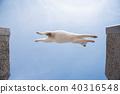 고양이, 푸른 하늘, 파란 하늘 40316548
