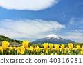 富士山 藍天 鬱金香 40316981